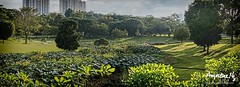 2018#39 (Augustinwee Photography) Tags: highrisebuilding housinginthepark hdb lightray light greenery flower plant trees sunrise augustinwee singapore npark park nature