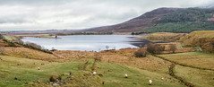 Drumleen Lake (mickreynolds) Tags: 2019 comayo january2019 nx500 newport outdoors wildatlanticway wilderness nature