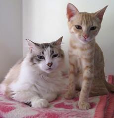 391-July'18 (Silvia Inacio) Tags: mel tabby gata gatos cat cats martini gato