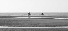 De Haan (Gabriela Oravova) Tags: belgium dehaan lecoqsurmer bw blackandwhite belgique belgië northsea noordzee merdunord canonpsg7x