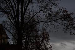 brown grey tree house (fdfotografie) Tags: tree house baum bäume haus ast äste stamm zweige ausschnitt flora pflanze silhouette himmel wolke schwarz dunkel hell braun architektur muster struktur outdoor tageslicht dslr farbfoto querformat d7500 expressiv serie herbst