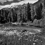 A River Flows Through a Forest and Mountains...and by Some Daisies (Black & White, North Cascades National Park Service Complex) thumbnail