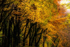 Enveloped in autumn 2 (odell_rd) Tags: coth coth5 alnwick northumberland autumn ngc