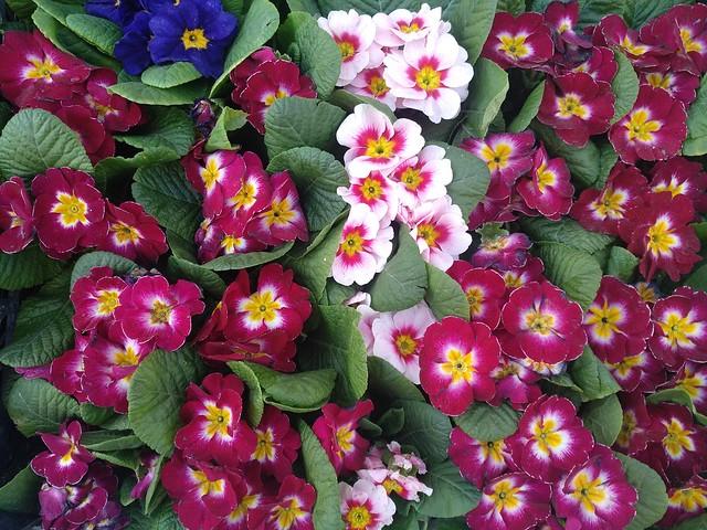 Обои Цветочки, Flowers, Colors картинки на рабочий стол, раздел цветы - скачать