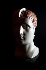 model head and brain (lauradavison) Tags: anatomical model vintage human body skeleton medical biology head face brain