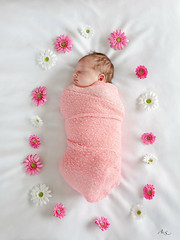 Bébé (Aline Sprauel Photography (AS photos)) Tags: newbornphotography newborn alinesprauel canon photographelandes