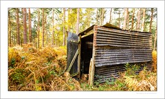 Woodman's hut (G. Postlethwaite esq.) Tags: derbyshire nationalforest robinwood autumn bracken ferns hut landscape outdoor photoborder shack trees wood wrigglytin