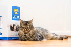 Dr. Elsey's Cat Ultra Premium Clumping Cat Litter (katalaynet) Tags: follow happy me fun photooftheday beautiful love friends