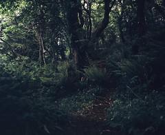 Small Irish Forest (nikolaijan) Tags: mamiya rb67 120 c90mmf38 fuji film treeportrait ireland forest fern provia400f courtmacsherrey green tree