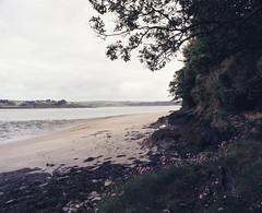 Courtmacsherry (nikolaijan) Tags: mamiya rb67 120 c90mmf38 fuji film bay beach ireland forest flowers provia400f courtmacsherrey green tree sea