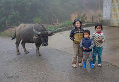 KIds and Water Buffalo in the Rain (cheryl strahl) Tags: asia vietnam machavillage hmong northernvietnam sapa ethnic waterbuffalo tribal