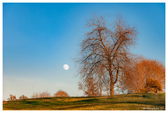 Lever de lune (Pascale_seg) Tags: landscape paysage campagne countryscape countryside arbre tree field champ hiver winter inverno nature earth lune moon luna