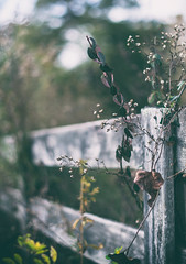 I dont have a title for this (Sarah Rausch) Tags: fencefriday vintage bokeh country rural weeds sony 50mm 18 niftyfifty