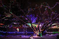Yard Full Of Lights (wyojones) Tags: wyoming cody christmas christmasseason holidays lights tree red candycane yard street merrychristmas decorations blue multicolored snow wyojones np