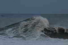 IMG_0670 (monika.carrie) Tags: monikacarrie wildlife scotland aberdeen waves