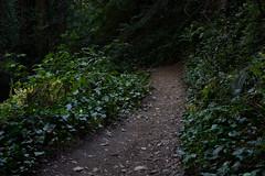 path (eeblet) Tags: blurry path forest joaquin miller park oakland redwoods