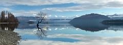 Lake Wanaka Panorama / New Zealand (Sebastian Warneke) Tags: lake wanaka canon eos 6d panorama tree thatwanakatree lone calm winter august september 2015 snow ice mirror reflection newzealand southisland aotearoa nz ptgui wallart