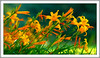 """~ Long necked Lilies ~ (Darrell Colby """" You Call The Shots """") Tags: long neck lily yellow floral flower flowers lilies londonontario darrellcolby"""