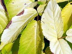 Turning Leaves (pmorris73) Tags: arboretum pennstateuniversity statecollege pennsylvania century 2ca1019 3ca1119 4ca1319 5ca2219 6cb0119 7cc0119 8cc0619