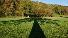 Schattenbaum Herbst (Aah-Yeah) Tags: herbst autumn tree wald forest achental chiemgau bayern schatten baum