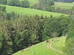 Dans la forêt noire (Micheline Canal) Tags: allemagne bavière landscape paysage foret fleur animal maison papillon