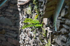 In the Spotlight (scottprice16) Tags: england cumbria lakedistrict lakedistrictnationalpark ldnp stone wall cottage fern green light autumn october 2018 colour fujixt1 fuji 18135mm