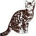Un chat marbré