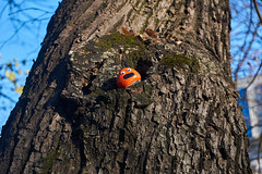 Accidental encounter (Michal Zawolek) Tags: krakow kraków krakau cracow poland polen funny smiley random accidental tree trees wood bark