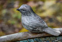 Metal bird (maytag97) Tags: theoregongarden maytag97 nikon d750 bird sparrow metal statue figure figurine outside outdoor texture closeup bokeh sit sitting