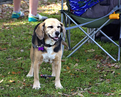 Good Ol' Hound (Mike McCall) Tags: copyright2019mikemccall photography photo image usa culture southern america thesouth unitedstates northamerica south georgia stpatricksdayrugbytournament stpatrick day rugby tournament game sport sports field pitch football savannah chatham county documentary editorial side daffin park daffinpark parkside