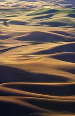 The Next Step (Smi77y_) Tags: washington oregon pnw photographer landscape sunrise wheatfields wheat