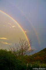 Rainbow (ElisaArduini) Tags: rainbow nature natura sky cielo colors colours tree trees albero alberi nikon nikond3200 photography