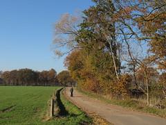 IMG_8958 (Momo1435) Tags: eindhoven brabant waalre herfst herfstkleuren netherlands autumn fall colors