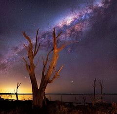Milky Way over Lake Ninan - Western Australia (inefekt69) Tags: milky way skytracker ioptron cosmology southern hemisphere cosmos western australia dslr long exposure rural night photography nikon stars astronomy space galaxy astrophotography outdoor core great rift d5500 panorama stitched mosaic tree water lake nature silhouette landscape sky milkyway southernhemisphere westernaustralia 35mm lakeninan wongan hills salt calingiri wheatbelt ptgui dead