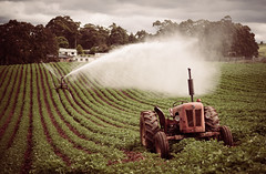 Potato Paddock (paulledger81) Tags: farm tractor potato tasmania david brown irrigation irrigator green food