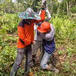 Community-Based Fire Prevention and Peatland Restoration thumbnail