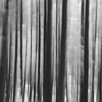 Thoreau | 1 (Walden) thumbnail