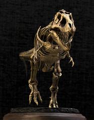 Primordial Profiles Brass 1:20 T. rex Stan (tee.rex75) Tags: trex tyrannosaurusrex dinosaur skeleton brass sculpture primordialprofiles scale model stan 120