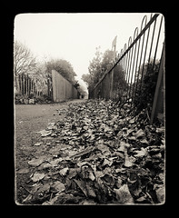 Leafy Path (Alex . Wendes) Tags: path leaf leaves leafy wideangle wide fence railings d7000 nikond7000 tokina1116mm tokina1116