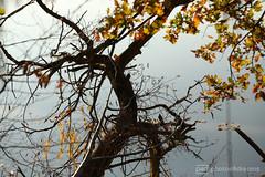 and into the river ... (photos4dreams) Tags: gersprenz münster hessen germany naturschutz nabu naturschutzgebiet photos4dreams p4d photos4dreamz nature river bach flus naherholung