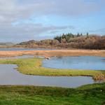 Wetland thumbnail