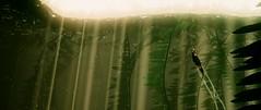 To the Light (xXSamirXx) Tags: abzû abzu giantsquid 505games ue4 unrealengine4 reshade reshadeframework