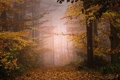 Number one (Rita Eberle-Wessner) Tags: forest wald woods laubwald laub leaves foliage nebel fog herbst autumn tree trees baum bäume buchen beech beeches waldweg forestpath numberone odenwald
