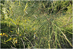 anselmo 95 (beauty of all things) Tags: italien toskana montespertoli anselmo flora green grün