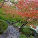 Wakayama Castle autumn colours.02
