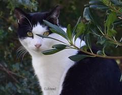 Entre ramas (rosaadda) Tags: closeup felinos animales nikon 5300 cats gatos