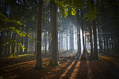 morgens bei Jennecken (NPPhotographie) Tags: nature art creative oberberg npp tree wood forest morning sun sunrise fog mist duct magic magical autumn fall elitegalleryao bestcapturesaoi