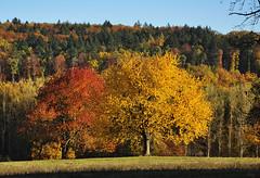 DSC_6652 Streuobstwiese im Herbst (Charli 49) Tags: nature streuobstwiese herbst baum laub bunt nikon d90