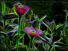 Brilliant Flowers and Leaves on Black with Glass Frame (Crystal Writer) Tags: kvad kvadphotostudiopro kvadphotostudio photostudiopro photostudioapp crystal crystalamurray crystalmurray crystalwriter christianwriter christian writer framed borderedandframed multicolored multicoloured rainbow hotpink pink green neongreen neon bright colorful colourful fractalius topazglow photo image original capture creation creative create frame olympus olympusdigitalcamera olympusem10 olympusomdem10 omdem10 mirrorlesscamera zuiko olympuslens 40150mm zuiko40150mm mzuiko olympusmzuikolens flower black blackbackground neohedges floral leaves