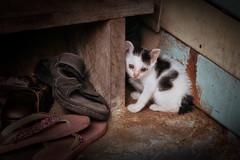 Bangkok – Baby cat (Thomas Mülchi) Tags: phayathaidistrict bangkok thailand 2018 phayathai saphankwaiworldwidephotowalk saphankwaiphotowalk bpg bangkokphotographersgroup photowalk worldwidephotowalk worldwidephotowalk2018 animal cat bangkokmetropolitanregion th